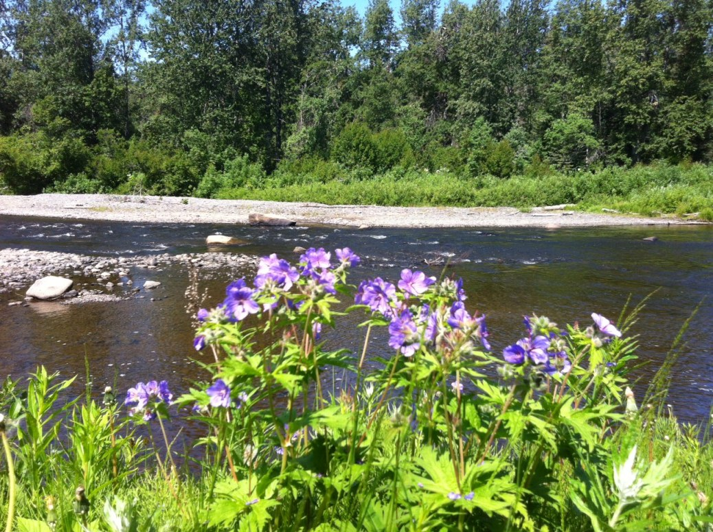 Anchor River Flowers 1